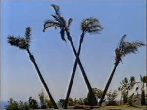 waialae country club has a w of palm trees and here s how it happened