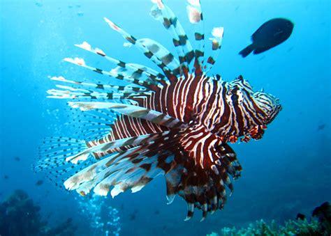 la cuisine des saveurs poisson monde sous marin martinique