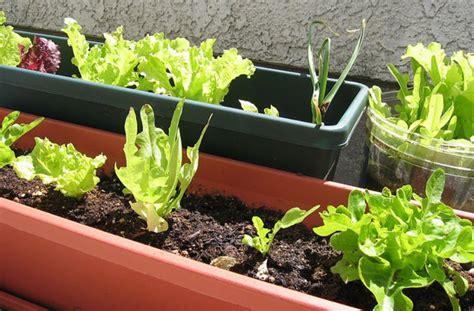 legumes en pot sur balcon un potager pour votre balcon cultiver ses laitues en ville