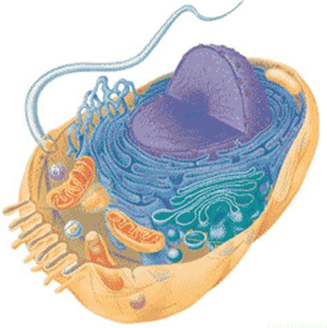 quia ap chapter  cells basic
