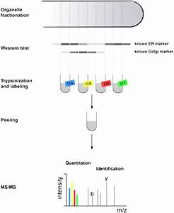 A Proteomics Approach to Membrane Trafficking | Plant ...