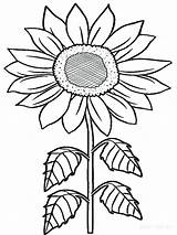 Sunflower Coloring Pages Sunflowers Flowers Adults Printable Rainforest Flower Van Drawing Tropical Sheet Gogh Getcolorings Clipartmag Getdrawings Raskraski Volkswagen Template sketch template