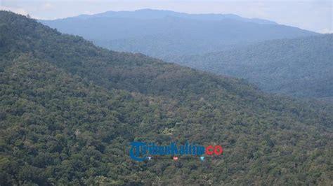 inilah bahaya besar bagi hutan  warga pedalaman