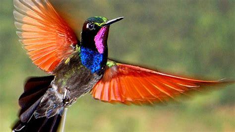Incredible Variety Beautiful Hummingbird Images Youtube