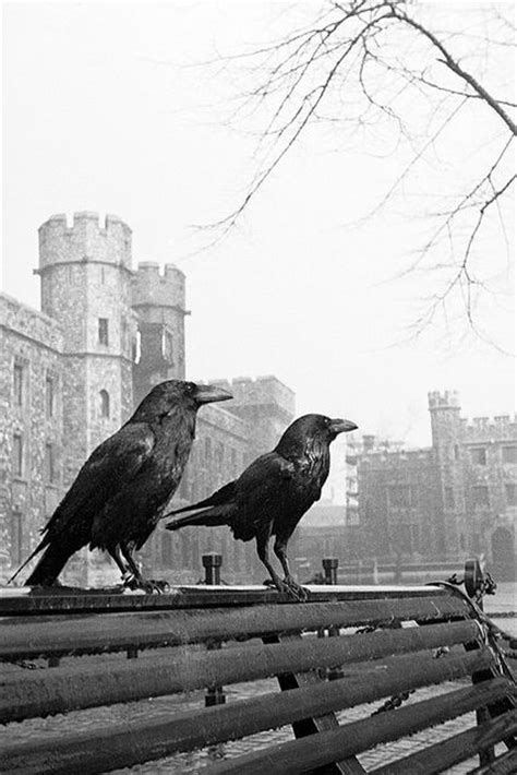 176 best images about raven haven and crows on pinterest