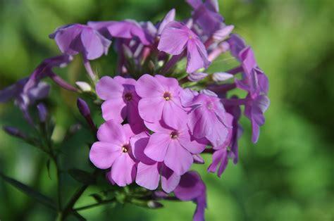 วอลเปเปอร์ : ธรรมชาติ, เบ่งบาน, ดอกไม้สีม่วง, ปลูก, กลีบ ...