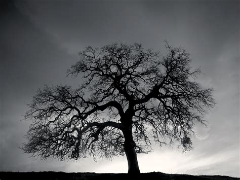 black  white images  trees  cool wallpaper
