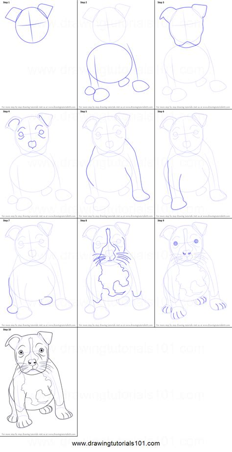 draw  pitbull puppy printable step  step drawing