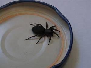 Ameisen Im Haus Ursache : unbekannte spinne im haus gefunden spinnen araneae ~ A.2002-acura-tl-radio.info Haus und Dekorationen