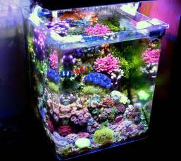 marine fish tank maintenance nano acrylic nano reef aquarium 2017 fish tank maintenance
