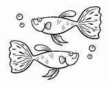 Guppy Fish Coloring Coloringcrew Sea sketch template