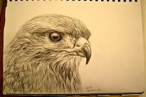 Charcoal sketch: Bird by ashlin422 on DeviantArt