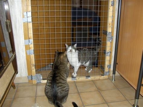 brechen bei katzen katzen suchen ein zuhause katzen aus reutlingen katzen aus