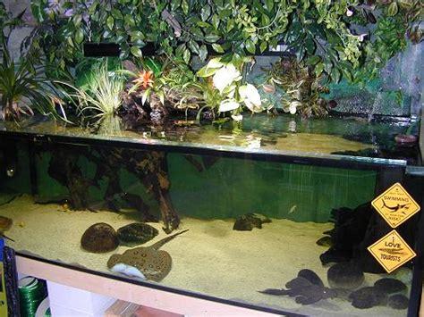 Potamotrygon  Im Aquarium  Stefan Bürki Rochenstich