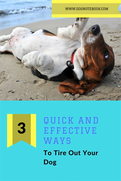 3 Quick And Effective Ways To Tire Out Your Dog  Dog Notebook