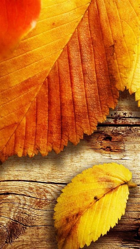 Fall Backgrounds Yellow by Yellow Wallpaper For Iphone Images Fall Wallpaper