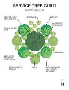 plant guilds sustainability jardin foret permaculture