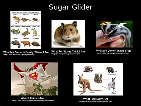 Sugar Meme - sugar meme related keywords suggestions sugar meme long tail keywords