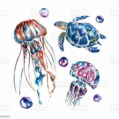Watercolor Jellyfish Turtles Background Vector Illustration Turtle