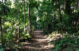 The Magic of Mount Tamborine for Families in Brisbane