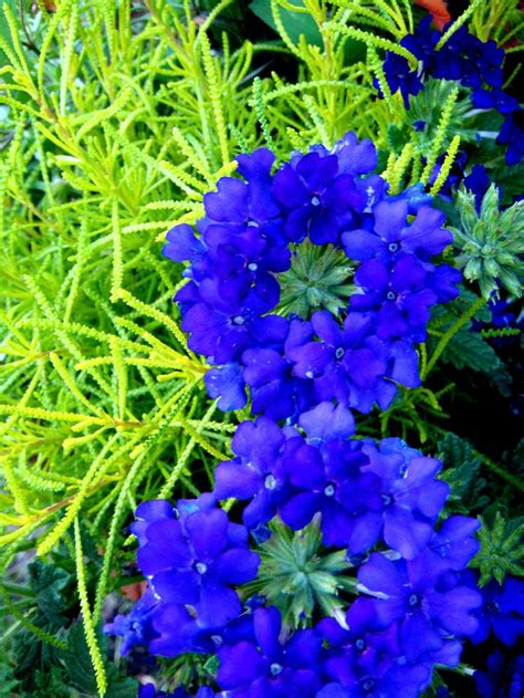 perennials that bloom all summer pin by kristie anderson on flowers gardening landscaping pinterest