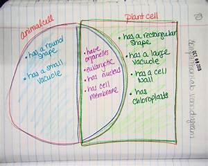Plant Cell And Animal Cell Venn Diagram