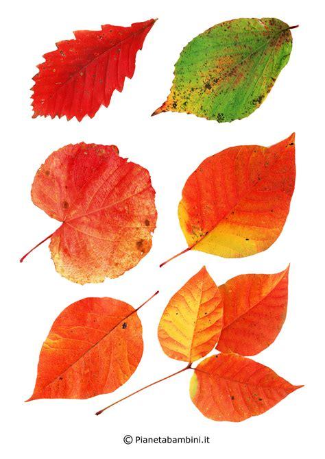 frutta  foglie autunnali da ritagliare  lavoretti