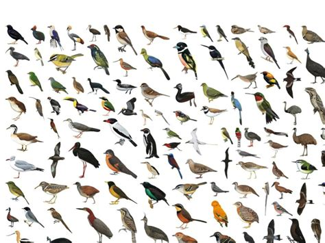 all birds images www imgkid com the image kid has it