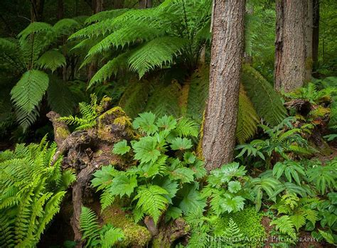 shade plants washington state 2234 best images about shade garden on pinterest japanese painted fern shade garden and
