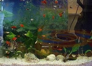 Bilder Feng Shui : feng shui bilder mystische einbruchssicherung laden aquarum sieben schwarze fische goldfische ~ Sanjose-hotels-ca.com Haus und Dekorationen