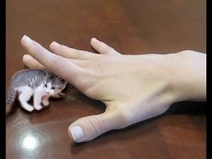 SMALLEST CAT IN THE WORLD! NANO KITTIES - SO CUTE! - YouTube