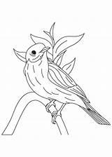 Bluebird Coloring Pages Western Eastern Bird Birds Printable Cartoon Drawings Designlooter 860px 47kb Popular Coloringhome sketch template