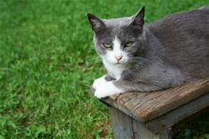 Katze Im Haus Halten : katzenabwehr im garten so halten sie katzen fern ~ Lizthompson.info Haus und Dekorationen
