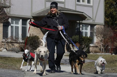 dog toronto walker walkers pet care take walk star need gta rupert lili cisco rocky luke takes thestar permit must
