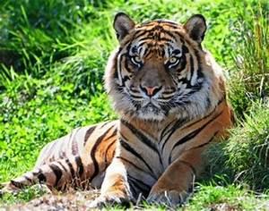 Bloodthirsty wild animal best blog: Images of animalia