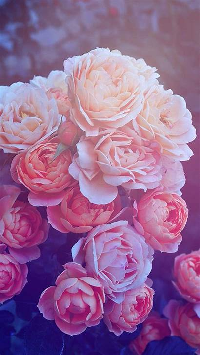Rose Gold Iphone Wallpapers Flower Backgrounds Flowers