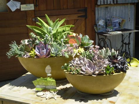 succulent gardens in pots succulents need 3 hours of sunlight a day garden pinterest succulent containers gardens