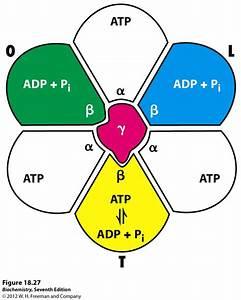 Kevin Ahern U0026 39 S Biochemistry  Bb 451  551  At Oregon State University