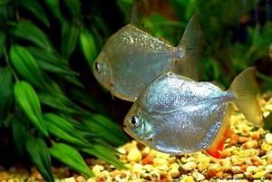 Freshwater Fish Wallpaper | Amazing Wallpapers