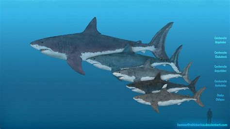 Megalodon Images Megalodon Facts And Pictures