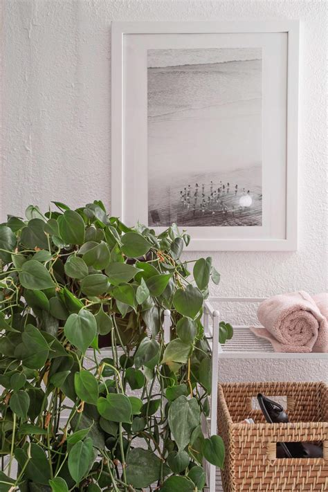 Plants For Bathrooms With No Window by 100 Plants For Bathrooms With No Window Indoor