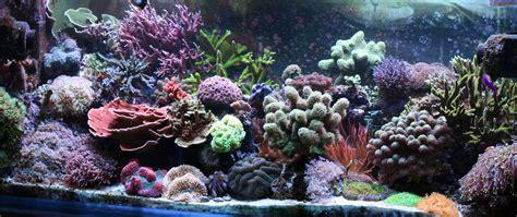 saltwater aquariums reef aquascaping on pinterest reef aquarium saltwater tank and saltwater aquarium