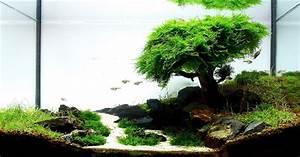 Java Moss - Care, Tips, Moss Carpets & Moss Trees