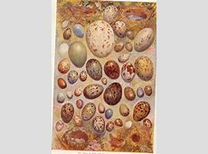 Eggs from the 1919 Book of Knowledge nhpeacenik