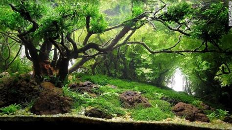 Japanese Aquascape Artist by Pimp My Fish Tank This Is The Eerie Beautiful World Of