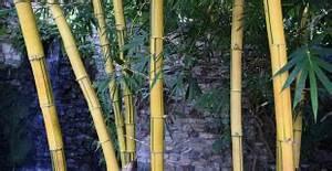 Gros Bambou Deco : taille de l abricotier quand et comment tailler son abricotier ~ Teatrodelosmanantiales.com Idées de Décoration
