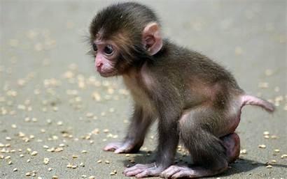 Monkey Backgrounds Tablet