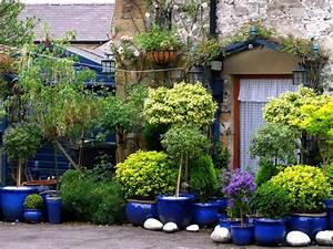 Arbuste Persistant En Pot : quel arbuste a mettre en bac ~ Premium-room.com Idées de Décoration