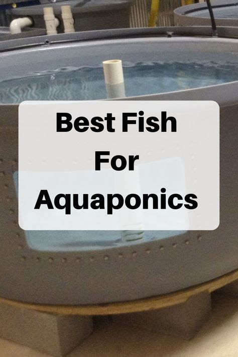 Best Fish for Aquaponics - Choose from 22 Species ...