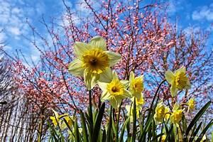 Aktuelle Blumen Im April : der fr hling ist da jetzt wohl ganz sicher bernau live ~ Markanthonyermac.com Haus und Dekorationen